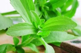 Φυτό-Στέβια-Χρήση-640x357